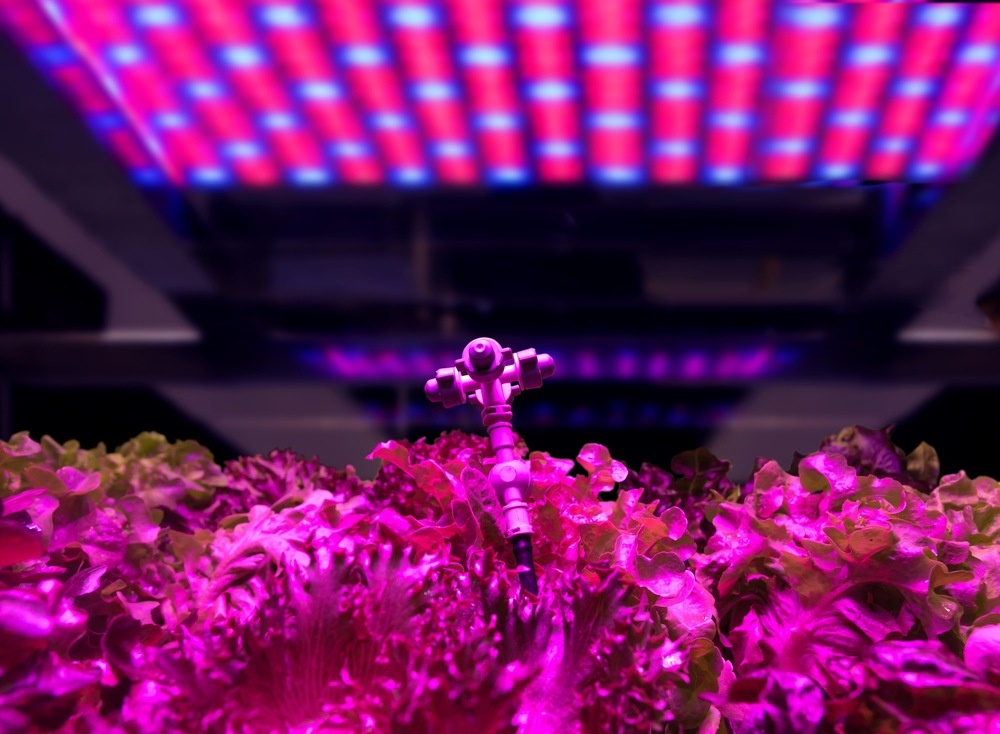 How to Use LED Grow Lights