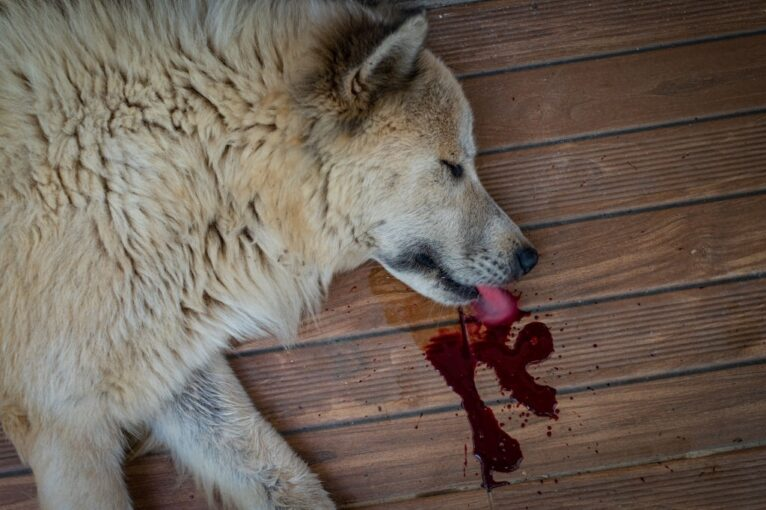 how to clean up a dead animal