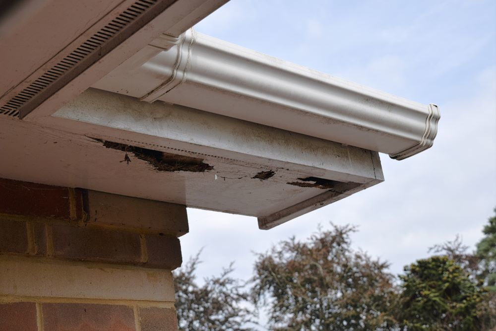 Problems With the Soffit
