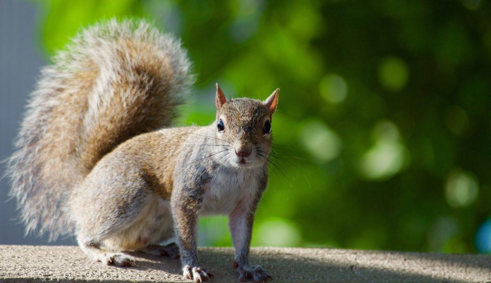 Squirrels Chews Patio Furniture