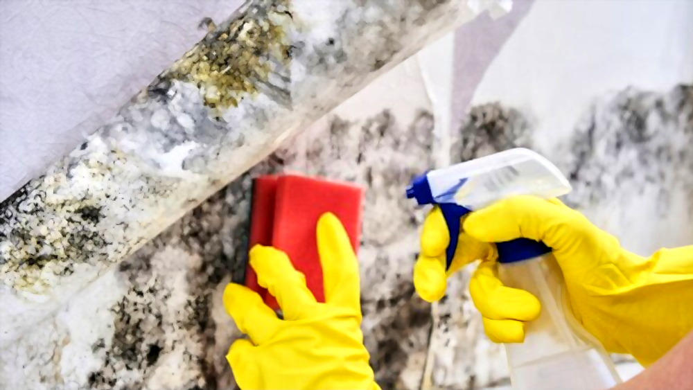Dealing with Mold
