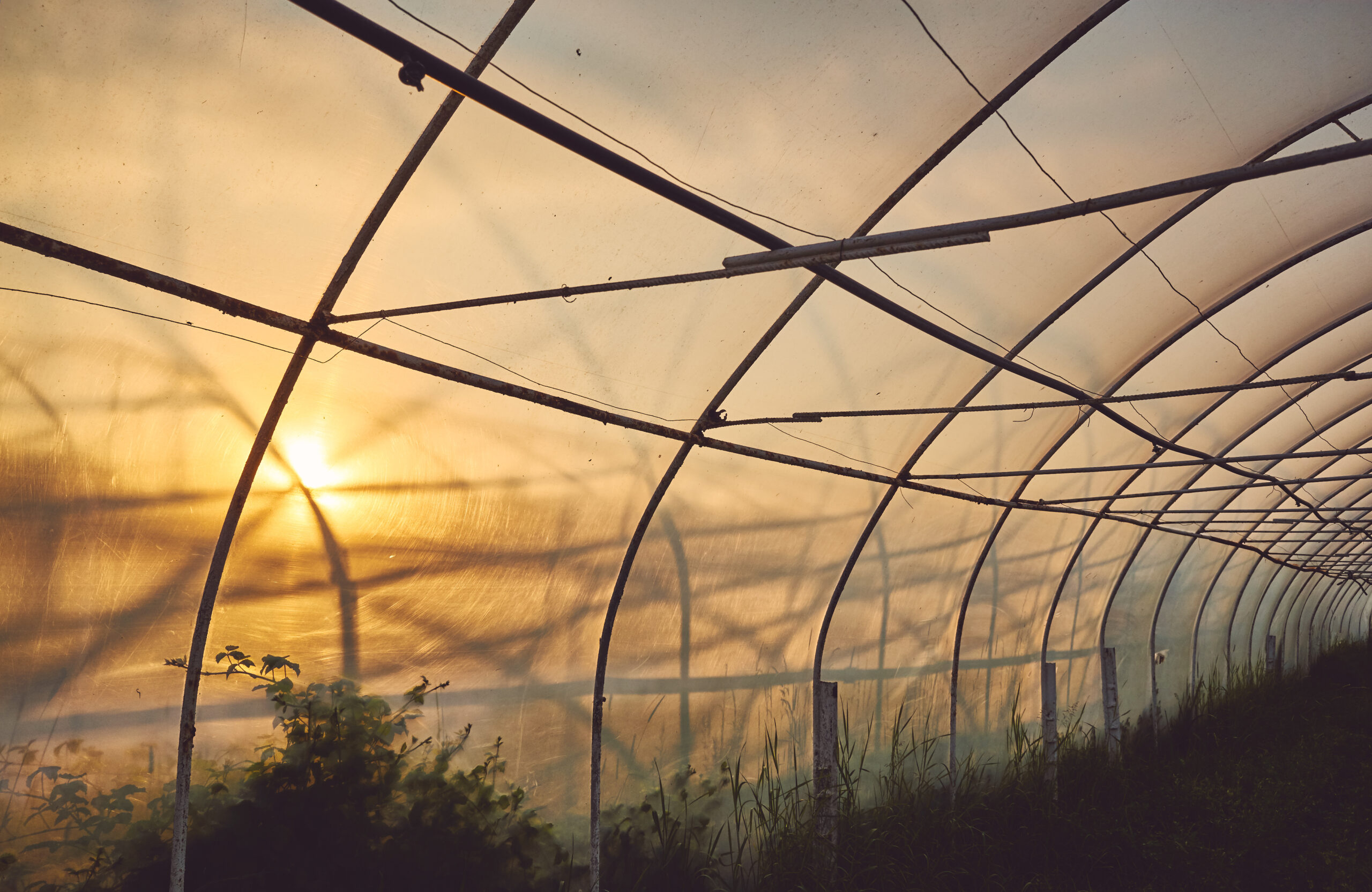 benefits of using a plastic greenhouse