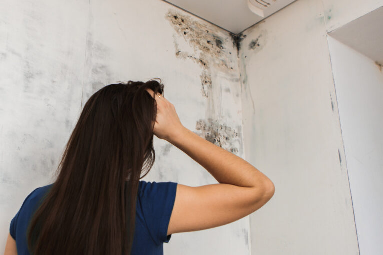 How To Deal With Mold Problems