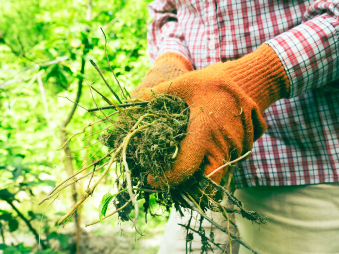 how to get rid of the weeds in yard