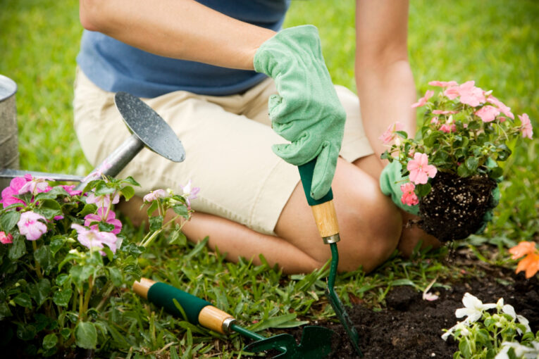 learn how to garden